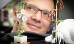 (FOTO) Florile Faberge din piatră – o capodoperă impresionantă. Le vei îndrăgi la prima vedere