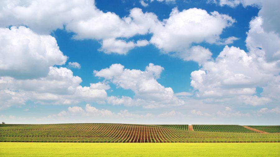 Subvențiile agricole, plătite cu întârziere. FNF cere dublarea fondului de subvenționare