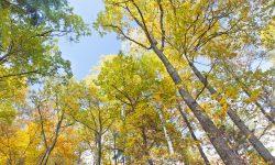 """Prima pădure """"inteligentă"""" din România. Defrișarea ilegală va fi prevenită cu ajutorul tehnologiei"""