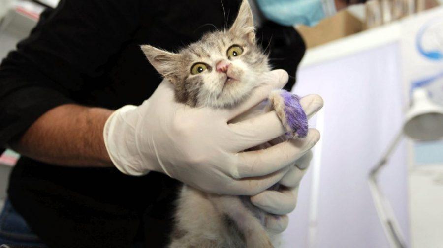 Țara care anunță primul caz de infectare cu tulpina britanică la animale. Ce spun specialiștii