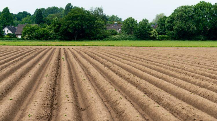Tehnologia vine în ajutorul agricultorilor. Startupul care dezvoltă tractoare robotizate electrice