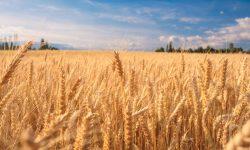 Alexandru Slusari: 17 mii de tone de grâu urmează să fie scoase din țară după 30 aprilie. DOCS