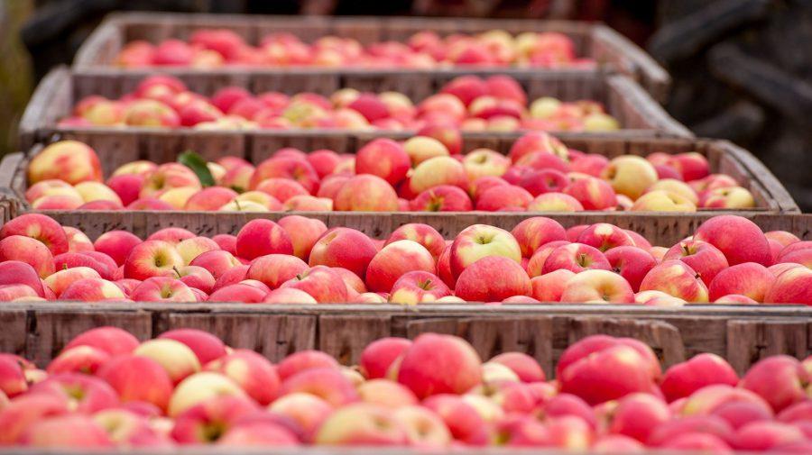 Va reuși Moldova să exporte stocurile rămase de mere de bună calitate până în iunie 2021?