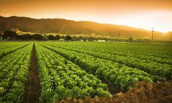 Agricultura din Moldova va beneficia de 685 de mii de dolari. În ce scop urmează a fi investiți