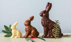 Ce au în comun ouăle de ciocolată și defrișările de păduri tropicale? Iată răspunsul