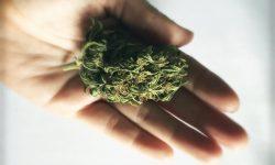Marijuana gratis pentru persoanele vaccinate. Oraşul în care a fost organizată campania
