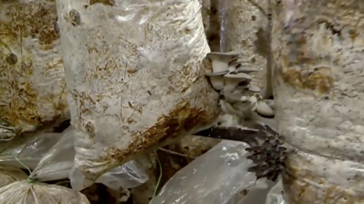Cum să cultivi ciuperci într-o mină unde anterior se extrăgea calcar. Istoria antreprenorului de la Făurești (VIDEO)