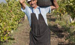 (FOTO) Povestea familiei cu o vinărie în Moldova. Acum au 360 de hectare podgorii, 2,5 mln l de vin și 60 de angajați
