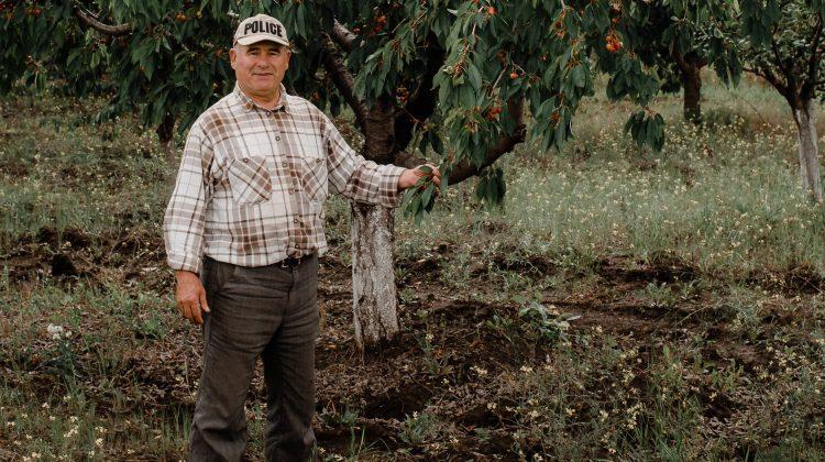 (FOTO) Un agricultor te invită să culegi cireșe direct din copac! La ieșire achiți proprietarului