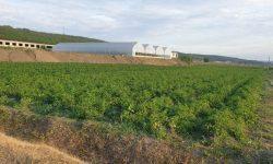 Legumele autohtone cultivate în spații protejate – premisă pentru dezvoltarea legumiculturii în RM. Istorie de succes