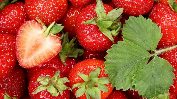 Mai puține căpșune în acest an. Prețurile sunt mai mari comparativ cu anii precedenți