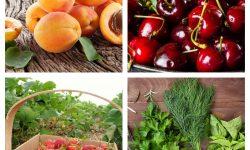 (FOTO) Prețurile afișate astăzi la Piața Centrală! Cât costă căpșunele, cireșele, zmeura, caisele și altele