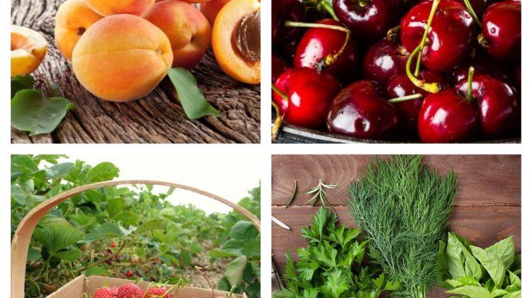 (FOTO) Au apărut în vânzare primele caise. Prețurile de astăzi la Piața Centrală pentru legume, fructe și verdeață