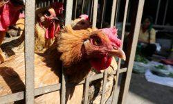 Tulpina H10N3 a gripei aviare a fost depistată pentru prima dată la om. În ce stare se află pacientul