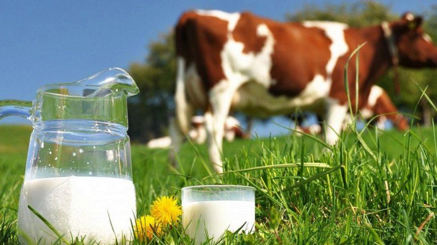 Premieră pentru Republica Moldova! Antreprenorii vor putea exporta produse lactate pe piața din UE