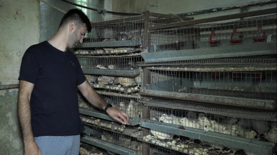 """Istoria de succes a antreprenorului din Dănceni care crește prepelițe. """"Este o afacere profitabilă"""""""