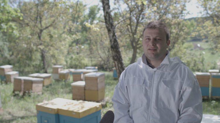 Apicultor: Pregătirea exportului de miere necesită mulți bani, efort și timp