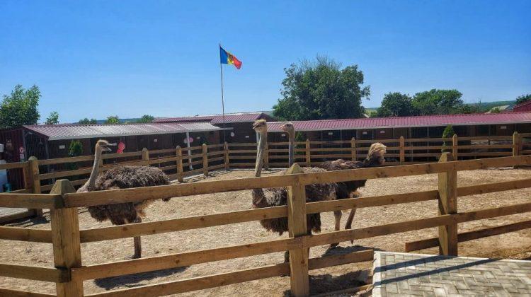 Grădină zoologică la ei acasă! Inițiativa unei tinere familii din Sadaclia