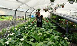 Ludmila Romaniuc, agricultoare: Nouă nu ne trebuie bani, nouă ne trebuie timp