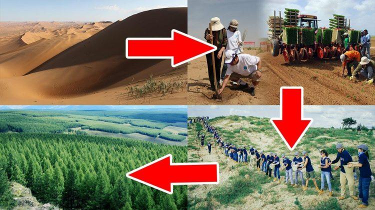 (VIDEO) Metoda inedită prin care China transformă deșerturile în terenuri arabile și păduri. Ce rezultate obțin?