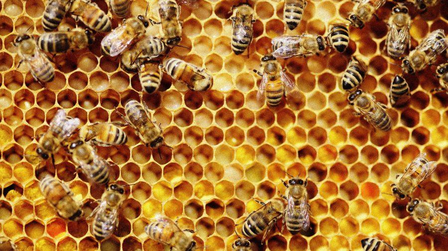 Exportul de miere în UE, în scădere. Care este cauza