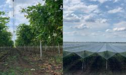 Agricultor: pentru a obține un rezultat bun este necesar de a investi în agricultura performantă, în tehnologii noi
