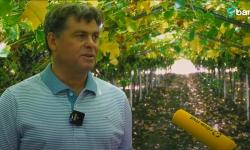 Moldoveanul care exportă struguri de masă în întreaga lume: Orice investiție este bună când se recuperează în 2-3 ani