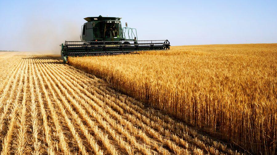 Agricultura – cel mai profitabil business din Ucraina în 2020. Opt din zece ferme au avut profit