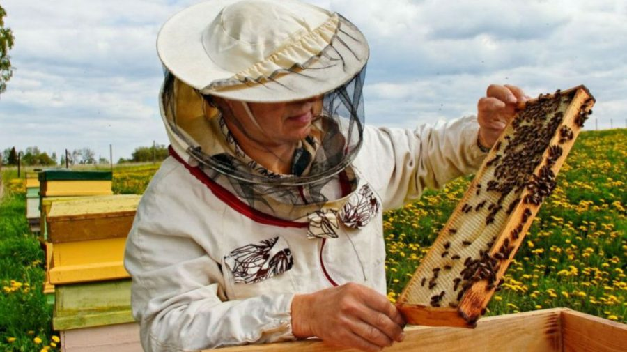 Sectorul apicol a înregistrat pierderi majore în anul 2020. Nemulțumirile reprezentanților din domeniu
