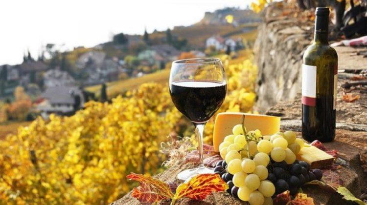 Cu ce provocări se confruntă sectorul vitivinicol? Ce spun producătorii din domeniu