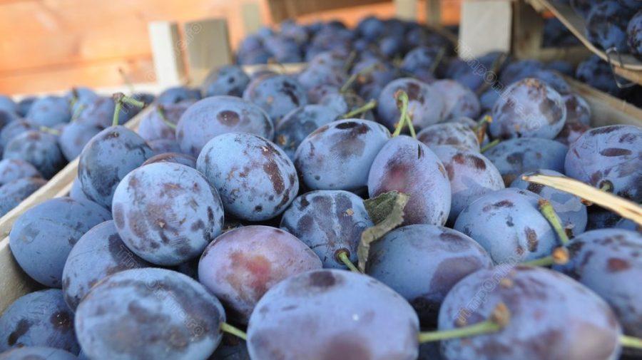 Care sunt cele mai cotate produse agro-alimentare moldovenești în UE? Studiu german