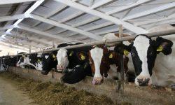 Prețul de livrare a laptelui cu greu acoperă cheltuielile. Problemele fermierilor din sectorul zootehnic
