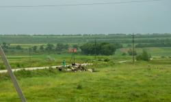 FAO sprijină micii fermieri din Moldova să-și sporească reziliența și productivitatea. Suma necesară pentru proiect