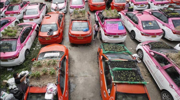 """(FOTO) Taxiurile """"lăsate în voia sorții"""" folosite ca parcele de legume. Castraveți și dovlecei pe acoperiș de mașini"""