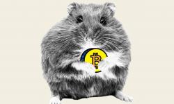 """Rozătorul cu spirit de afaceri. Mr. Goxx, hamsterul care """"bate"""" investitorii umani la tranzacționarea de criptomonede"""