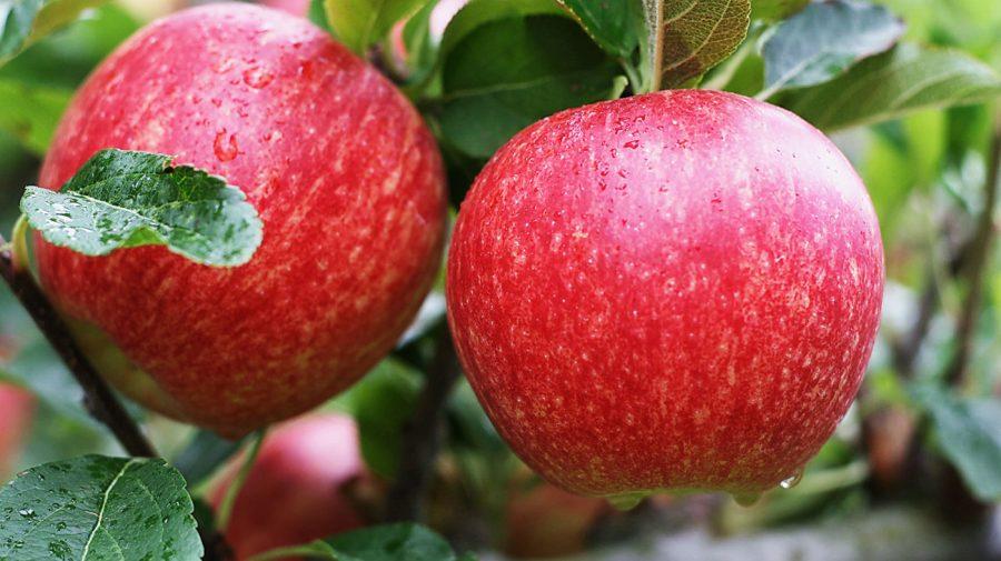"""Mărul """"Royal Gala"""" ocupă 60% din cererea de piață, la nivel mondial. Ce spun experții internaționali"""