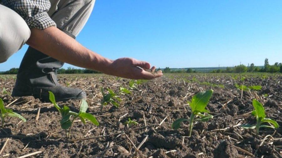 Secătuiți de seceta din anul 2020. Au fost reluate plățile pentru fermieri