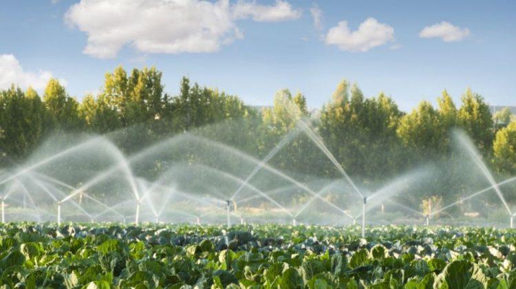 Agricultura salvează economia Moldovei. Ce domenii țin  țara pe linia de plutire